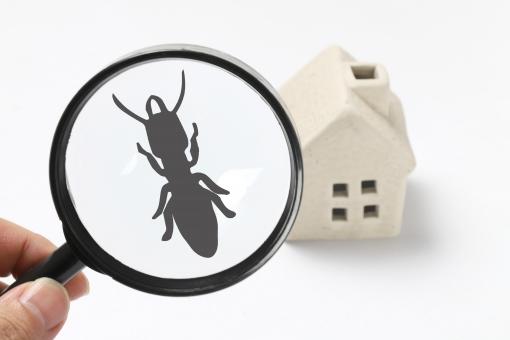 「白蟻(シロアリ)から木の家を守るためには?」