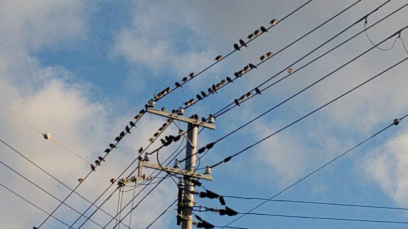渡り鳥の季節